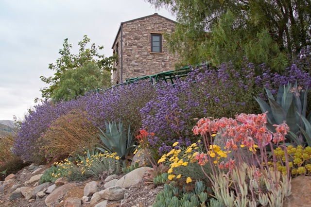 Photos of Drought Tolerant & Native Landscape Design