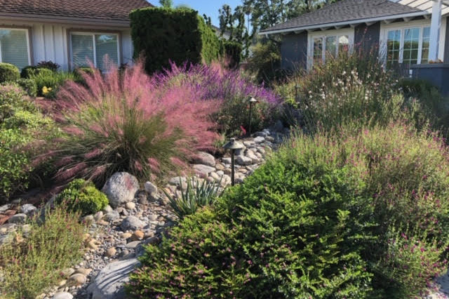 Succulents and unthirsty  plants add color, formerly a water loving lawn